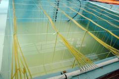 Stock Photo of shrimp aquaculture bath