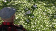 Stock Video Footage of Old man smelling apple tree blossom
