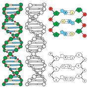 Dna - helix molecule model Stock Illustration