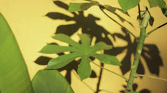 Plant detail - stock footage
