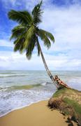 Leaning palm tree at las terrenas beach, samana peninsula Stock Photos