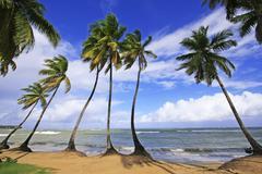 Las Terrenas ranta, Samana niemimaan, Dominikaaninen tasavalta Kuvituskuvat