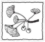 Ginkgo biloba hand-drawn branch with leaves Stock Illustration
