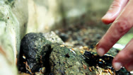Stock Video Footage of Tailed amphibian, fire salamander take 1