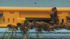Bees entering the hive, closeup Stock Footage