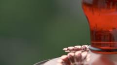 Hummingbird 005 05-19-2013 Stock Footage