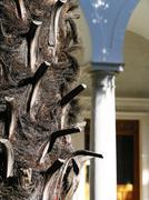 Trunk of palm-tree Stock Photos