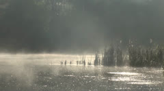 Beautiful type on the morning river Stock Footage