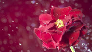 Stock Video Footage of Spring Water splashing over a flower