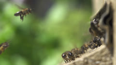 Honey bees before the hive entrance - stock footage