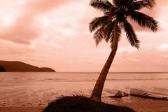 palm tree on sand beach - stock photo