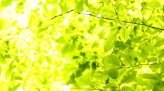 Light green background Stock Footage
