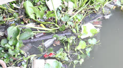 Garbage in river make water pollution Stock Footage