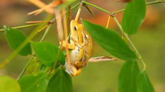 Frogs Stock Footage