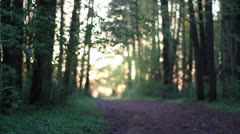 Forest path - stock footage