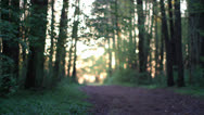 Stock Video Footage of Forest path