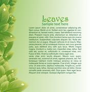 Green leaves abstract background for brochures - stock illustration