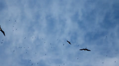 Seagulls in SloMo Stock Footage