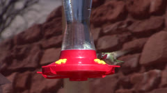 P02795 Male Anna's Hummingbird at Feeder Stock Footage