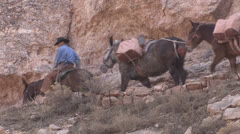 P02797 Trail Pack with Mules at Grand Canyon National Park Stock Footage
