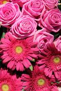 pink roses and gerberas in a bridal arrangement - stock photo