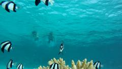 Snorkelling together Stock Footage