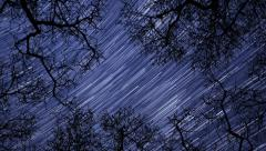 Night sky stars between trees time lapse star trail 10938 Stock Footage