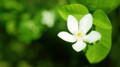 a white flower - stock photo