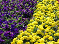 Colorful flowers. Stock Photos