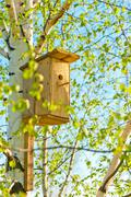 Wooden birdhouse attached to birch Stock Photos