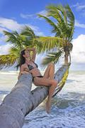 young woman in bikini sitting on palm trees - stock photo