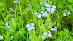 Blue flowers, shooting slider Stock Footage