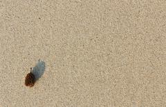 pine nut on sand - stock photo