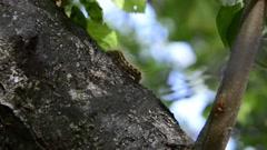 Caterpillar crawl on tree side Stock Footage