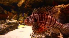 Exotic Fish in Aquarium Stock Footage