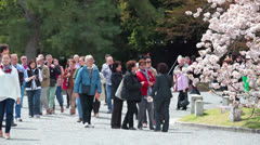 Sightseers looking at sakura blossom in Imperial Palace Garden, Kyoto, Japan Stock Footage