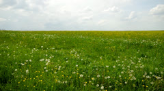 Green meadow with sky Stock Footage