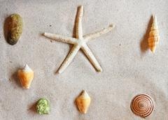 Various of sea shells on sand Stock Photos