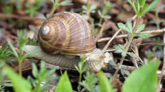 Snail resting on spring branch Stock Footage