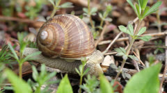 Snail on spring branch Stock Footage