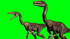 two dinosaurs on a green screen - stock footage