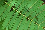 Stock Photo of Bracken Background