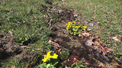 Stock Video Footage of Yellow flowers and cold mountain river