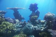 Stock Photo of coral reef of red sea