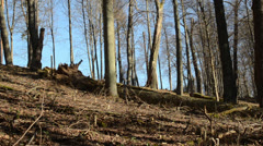 Forest view dry leaves fallen tree branch stumps Stock Footage