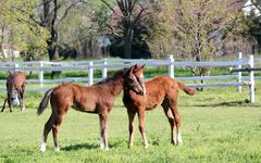Foals in corral ranch scene Stock Photos