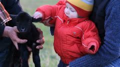 Colored baby child playing with a black baby lamb Stock Footage