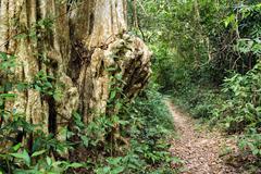 tropical adventure - stock photo