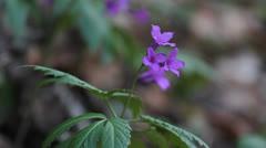 Focus on purple flowers Stock Footage