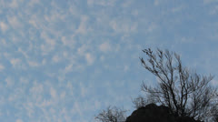 Dissipate clouds passing over the empty tree on a hill Stock Footage